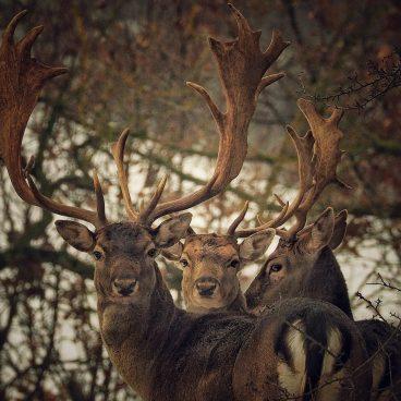 safari-fotografico-fauna-paesaggi-val-borbera_3_quarto_piemonte