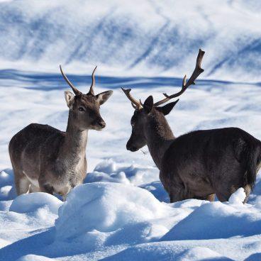 safari-fotografico-fauna-paesaggi-val-borbera_1_quarto_piemonte