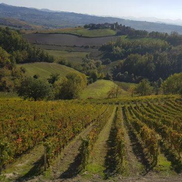Degustazione vini Vigneti Repetto 6